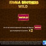 Koala wild